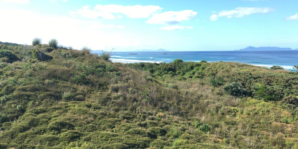 Pakiri-Beach-New-Zealand-Sand-Mining-Pakiri-Beach-friends-of-Pakiri-Beach-18
